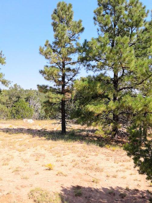 157 Jesse James Road, Edgewood, NM 87015 (MLS #1001372) :: Campbell & Campbell Real Estate Services
