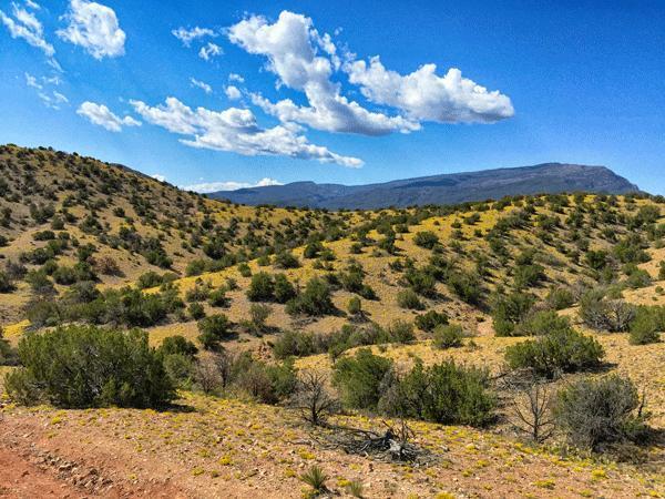 Mountain View Acres, Placitas, NM 87043 (MLS #898904) :: Your Casa Team
