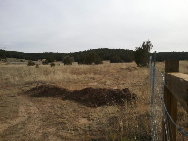 0 Kings Rd - Premitive Rd, Tijeras, NM 87059 (MLS #900407) :: Berkshire Hathaway HomeServices Santa Fe Real Estate