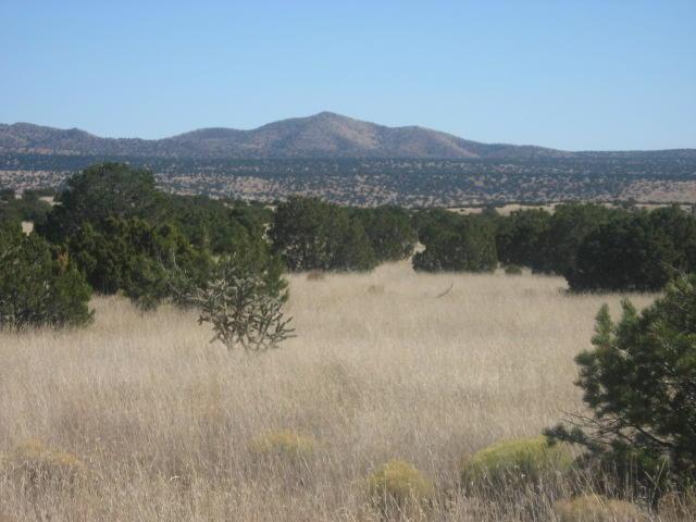 Lot 30 Pinon Springs, Magdalena, NM 87825 (MLS #903066) :: The Bigelow Team / Red Fox Realty