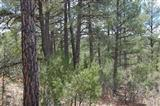 23 Green Shadow Road SE, Tijeras, NM 87059 (MLS #904119) :: Campbell & Campbell Real Estate Services