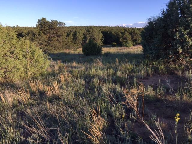 20 Mccomb Road, Edgewood, NM 87015 (MLS #909510) :: Campbell & Campbell Real Estate Services