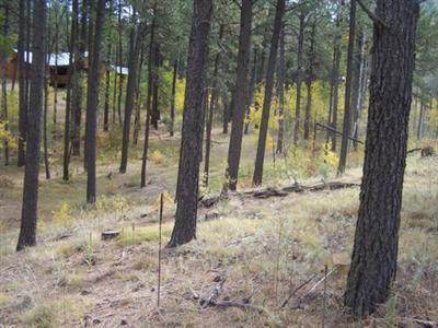 0 Los Griegos Road, Jemez Springs, NM 87025 (MLS #909593) :: Campbell & Campbell Real Estate Services