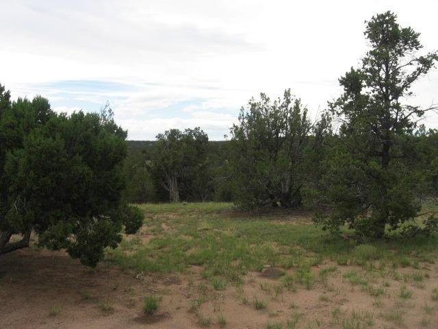 200 Agua Fria Trail Trail, Datil, NM 87821 (MLS #915698) :: The Bigelow Team / Red Fox Realty