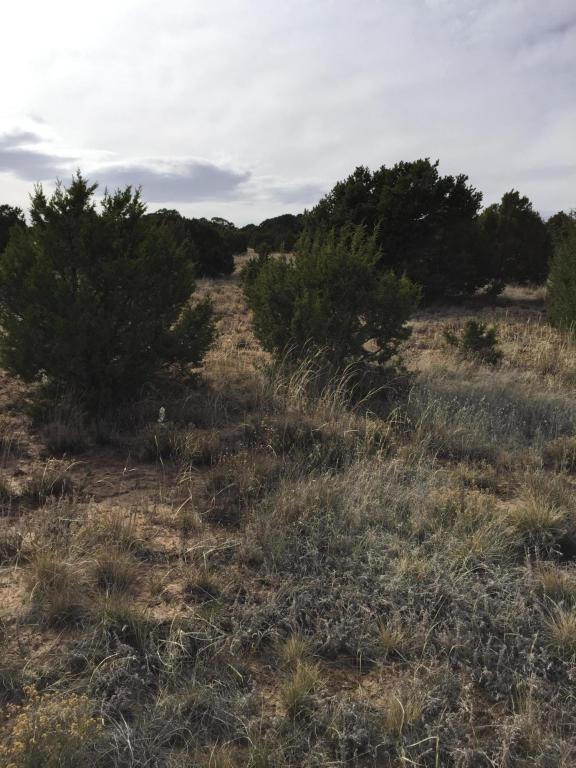 295 Forest Road, Tijeras, NM 87059 (MLS #916404) :: Campbell & Campbell Real Estate Services