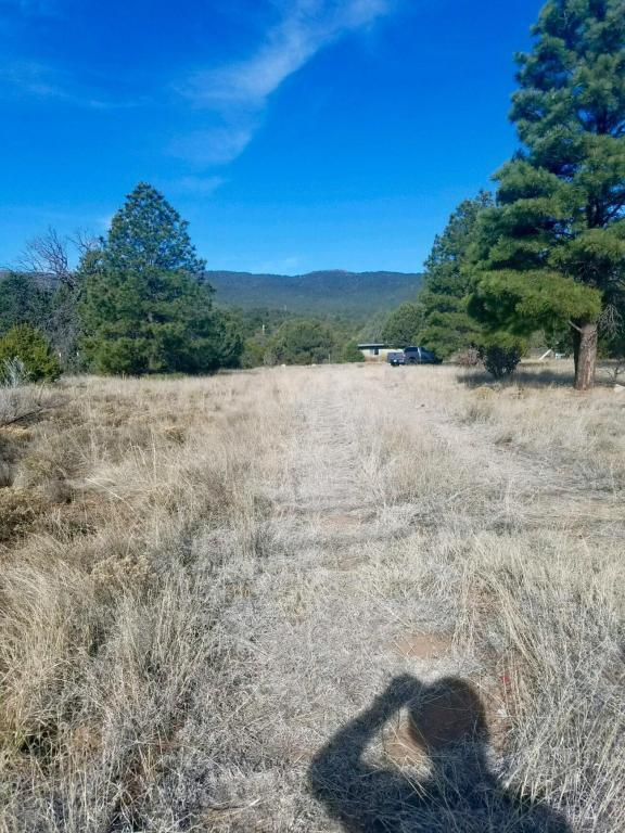 12229 State Highway 14, Cedar Crest, NM 87008 (MLS #917660) :: Will Beecher at Keller Williams Realty