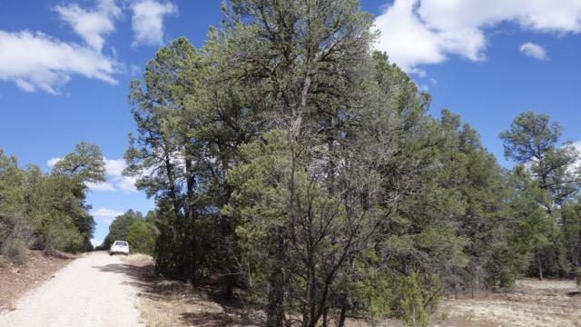 Lot 2 Bluebird Road, Ramah, NM 87321 (MLS #918695) :: Will Beecher at Keller Williams Realty