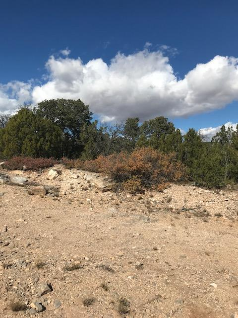 11D Learn Road, Edgewood, NM 87015 (MLS #920410) :: Campbell & Campbell Real Estate Services