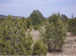 0 Lakewood Road, Tajique, NM 87016 (MLS #922795) :: Campbell & Campbell Real Estate Services