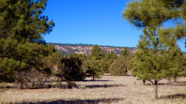 Lot 7 Timber Lake Rd., Ramah, NM 87321 (MLS #937323) :: Campbell & Campbell Real Estate Services