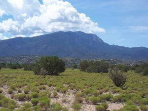 36 Horseshoe Loop, Placitas, NM 87043 (MLS #940499) :: Campbell & Campbell Real Estate Services