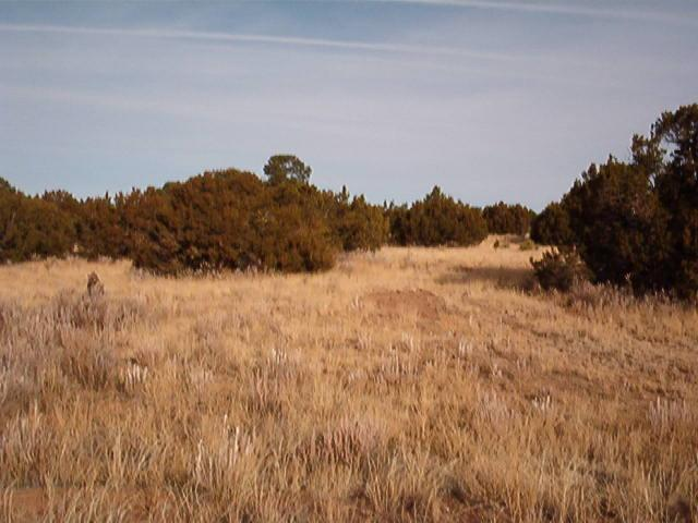 7 Cedar Tree Lane, Edgewood, NM 87015 (MLS #947618) :: Campbell & Campbell Real Estate Services