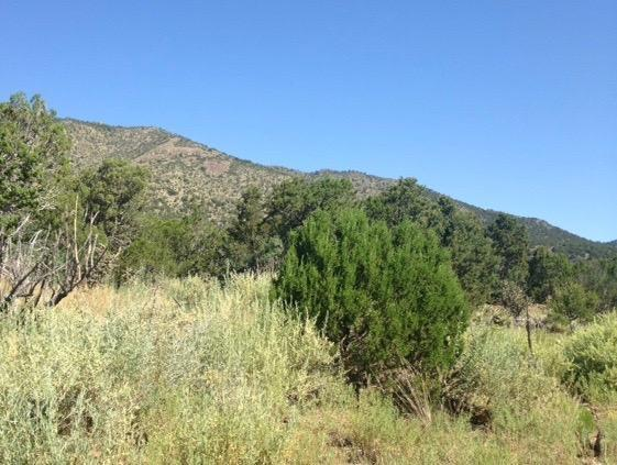 17 Tazarie Lane, Edgewood, NM 87015 (MLS #949927) :: Campbell & Campbell Real Estate Services