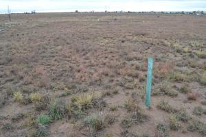 0 Penny Lane, Moriarty, NM 87035 (MLS #950620) :: Campbell & Campbell Real Estate Services