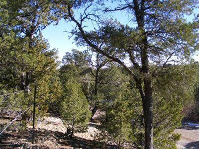 32 Canoncito Vista Road, Tijeras, NM 87059 (MLS #965142) :: Sandi Pressley Team