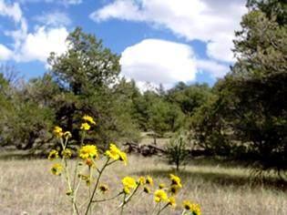 15 Elk Court, Datil, NM 87821 (MLS #976934) :: Keller Williams Realty