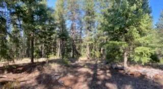 Los Griegos Road, Jemez Springs, NM 87025 (MLS #977881) :: Keller Williams Realty