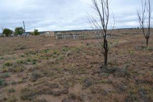 28 Penny Lane, Moriarty, NM 87035 (MLS #977931) :: Campbell & Campbell Real Estate Services