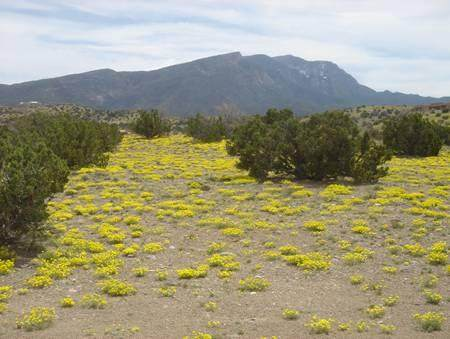 Camino Sandia, Placitas, NM 87043 (MLS #977978) :: The Bigelow Team / Red Fox Realty