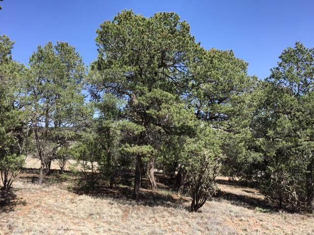 0 Mountain Valley, Tijeras, NM 87059 (MLS #978513) :: The Bigelow Team / Red Fox Realty