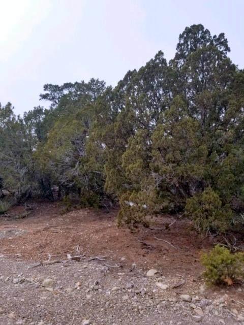 10 Bridal Lane, Tijeras, NM 87059 (MLS #978701) :: The Buchman Group