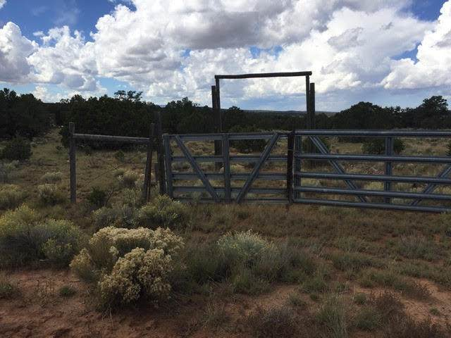 31 E Sawtooth Drive, Pie Town, NM 87827 (MLS #979078) :: The Bigelow Team / Red Fox Realty