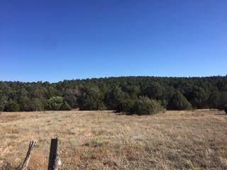 Map 5 & 6 Chilili Land Grant, Manzano, NM 87016 (MLS #979814) :: The Bigelow Team / Red Fox Realty