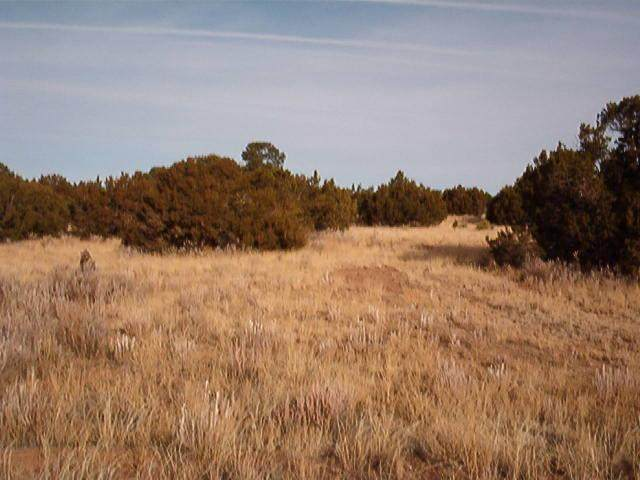 7 Cedar Tree Lane, Edgewood, NM 87015 (MLS #979947) :: Campbell & Campbell Real Estate Services