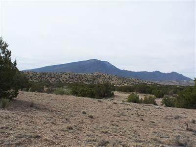 349 Camino De La Rosa Castilla, Placitas, NM 87043 (MLS #980150) :: The Buchman Group