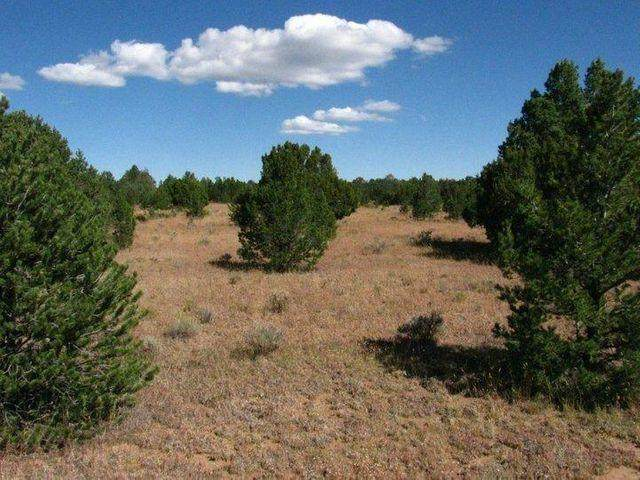 Tierra Verde Lands, Grants, NM 87020 (MLS #986476) :: The Buchman Group
