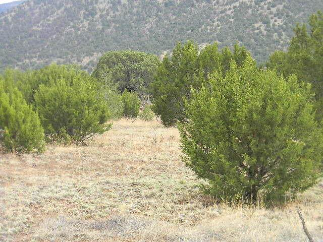 Galilee Subdivision, Magdalena, NM 87825 (MLS #988283) :: The Buchman Group