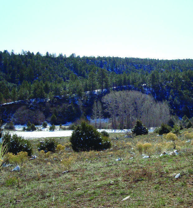 Forest Road 160, Chamisal, NM 87521 (MLS #992456) :: Campbell & Campbell Real Estate Services