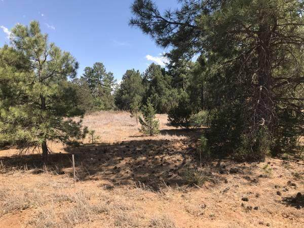 11 Fischer Lane, Tijeras, NM 87059 (MLS #996628) :: Campbell & Campbell Real Estate Services