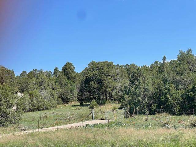 South 14, Tijeras, NM 87059 (MLS #996910) :: Campbell & Campbell Real Estate Services