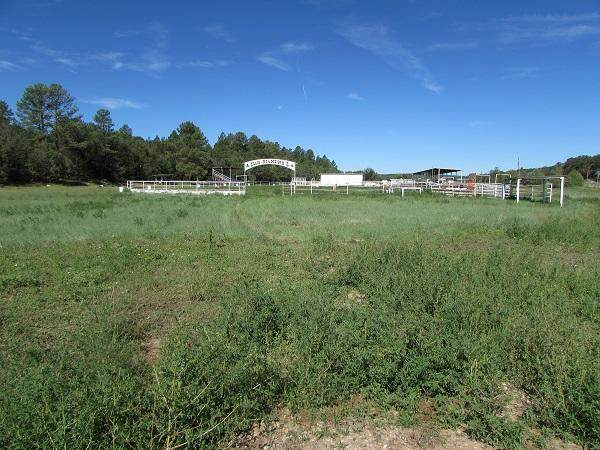 90 Nm-217, Tijeras, NM 87059 (MLS #998458) :: Campbell & Campbell Real Estate Services