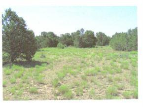 275 Federal Forest NE, Mountainair, NM 87036 (MLS #498660) :: The Stratmoen & Mesch Team