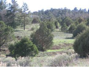 11 Moots Court, Tijeras, NM 87059 (MLS #861319) :: Campbell & Campbell Real Estate Services