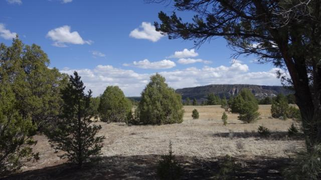 Lot 27 Copperweed Drive, Ramah, NM 87321 (MLS #918652) :: Will Beecher at Keller Williams Realty