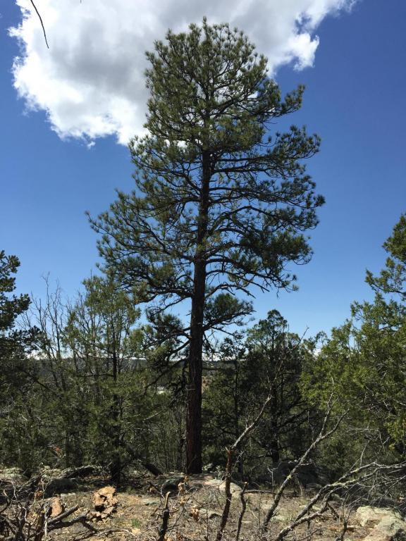 70 Anaya, Tijeras, NM 87059 (MLS #890716) :: Campbell & Campbell Real Estate Services