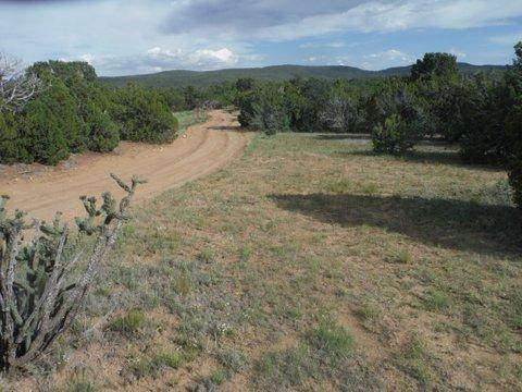 500 Forest Road 462, Tijeras, NM 87059 (MLS #947019) :: Berkshire Hathaway HomeServices Santa Fe Real Estate
