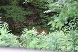 2315 Pond Mtn Ln - Photo 10