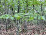 61.13 ac Indian Meadow - Photo 11