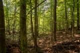 31792 Nature Way - Photo 31