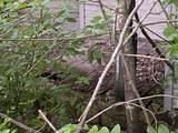 145 Cedar Branch Rd - Photo 27
