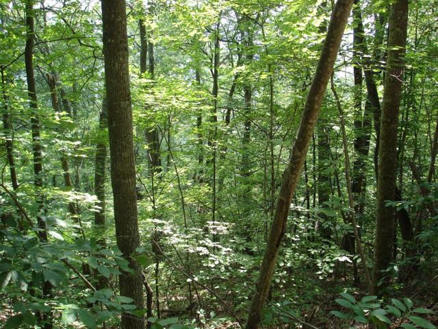 TBD North Fork River Rd  Lot 24, Abingdon, VA 24210 (MLS #64686) :: Highlands Realty, Inc.