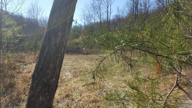 tbd Woolwine Highway, Woolwine, VA 24068 (MLS #67686) :: Highlands Realty, Inc.