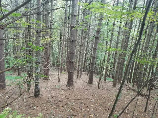 TBD Stoneman Rd, Woodlawn, VA 24381 (MLS #79046) :: Highlands Realty, Inc.