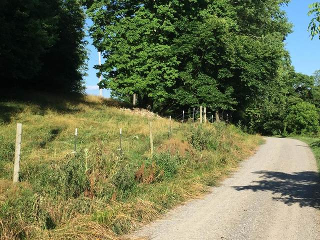 TBD Blanche Davis, Castlewood, VA 24224 (MLS #74633) :: Highlands Realty, Inc.