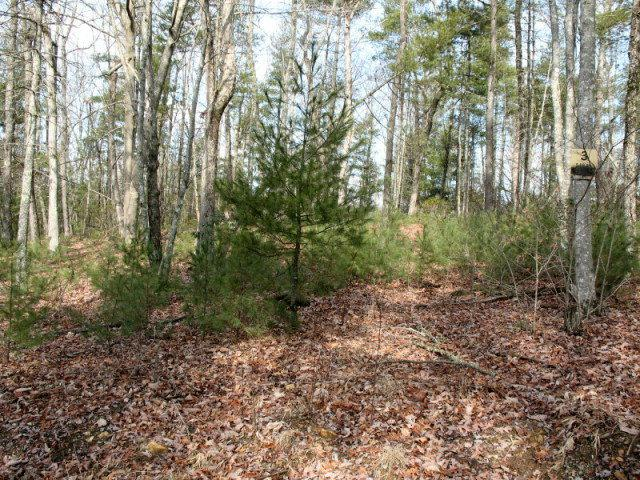 TBD Green Valley Lane, Galax, VA 24333 (MLS #40326) :: Highlands Realty, Inc.
