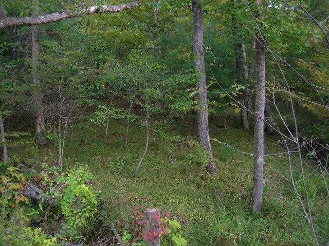 TBD Smith Hollow Rd, Wytheville, VA 24382 (MLS #43747) :: Highlands Realty, Inc.